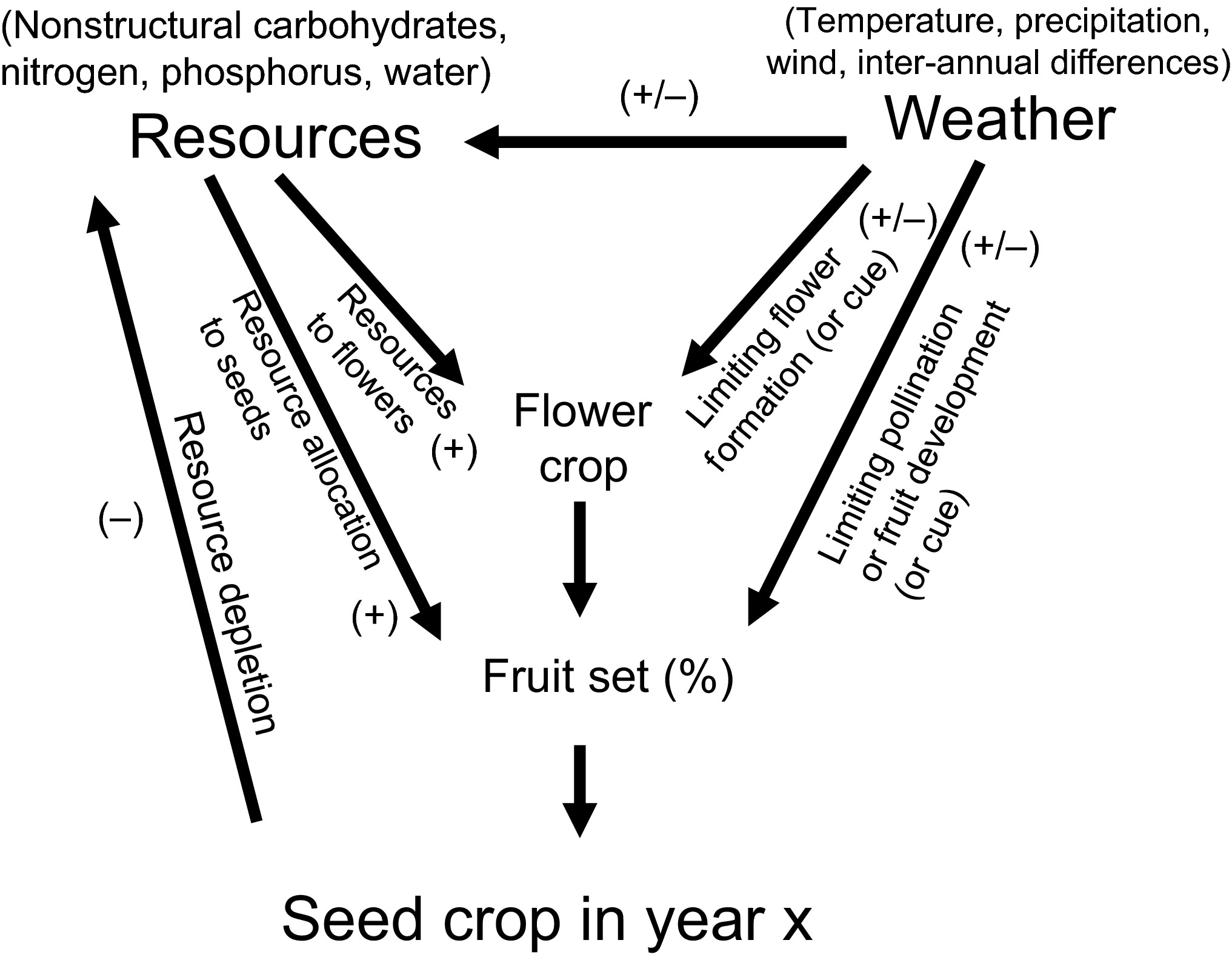 Mechanisms of mast seeding: resources, weather, cues, and