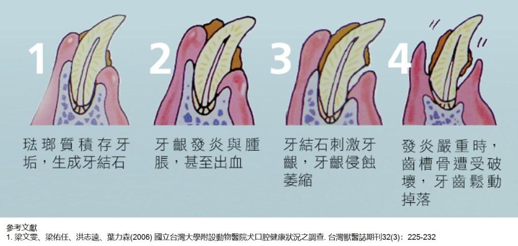 寵物牙齒健康牙結石牙菌斑牙周病形成示意,NPIC潔牙骨