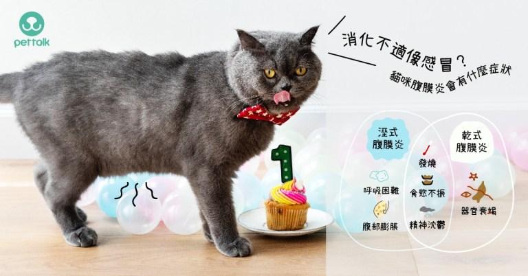消化不適像感冒?貓咪的傳染性腹膜炎會有什麼症狀?|專業獸醫師—王允軍醫師