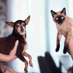 people holding siamese cat and short coat black dog