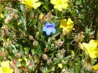 sete-sangrias-flor