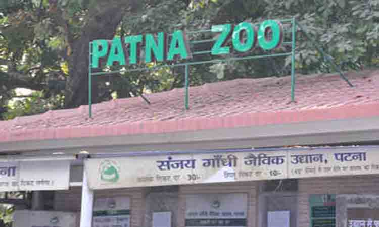 Patna Zoo closed after 6 peacocks die - NP News24 National News