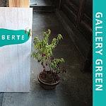 Gallery GREEN企画 vol.2.5「冬もそろそろにゃーお」展