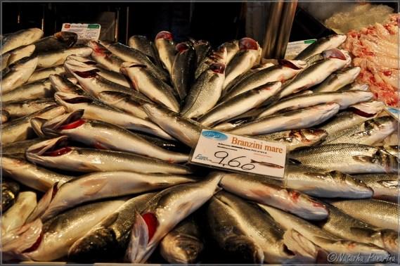 ven-merc-fish1-22