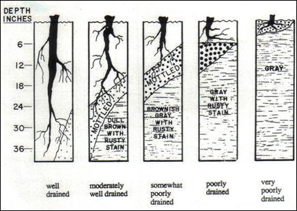 soil drainage class.JPG
