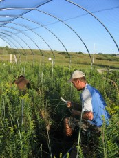 Kevin Wilcox works under rainout shelters at the Climate Extremes experiment, Konza Prairie LTER, Kansas.