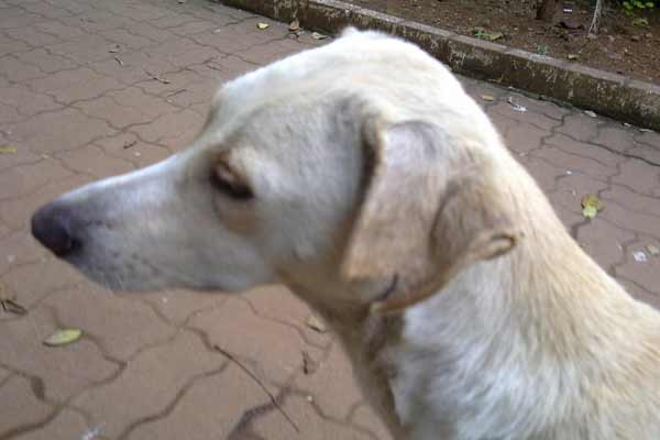 NGO Canine Control and Care (CCC): conducting free sterilisation surgeries on stray dogs and cats