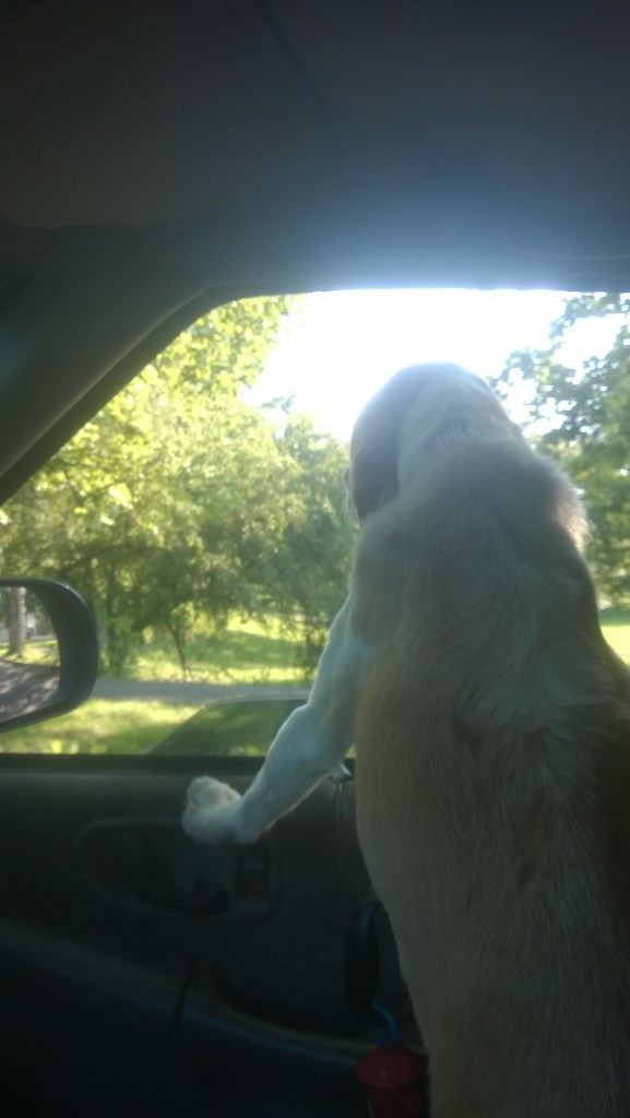 Driving through City Park to let him do his smell thing, after picking up McDonald's drive thru for one last ditch effort at getting him to eat again.