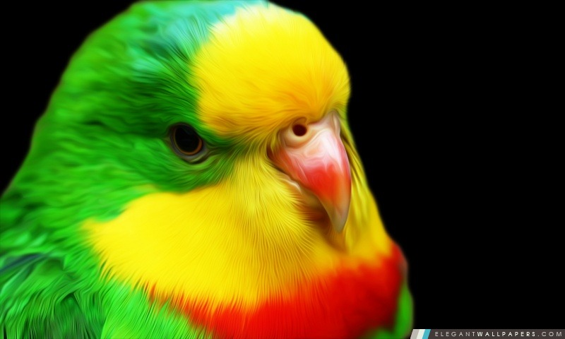 Cute Cockatiel Wallpaper Perroquet Fond D 233 Cran Hd 224 T 233 L 233 Charger Elegant Wallpapers