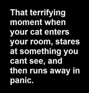 that terrifying moment when your cat enters your room