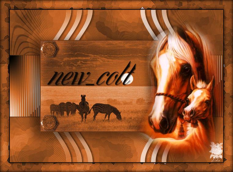 new_colt
