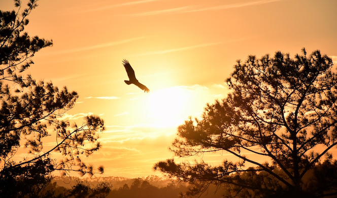 Fly As A Free Bird No Strings Attached Enews