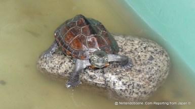 Shitaya Shrine Turtle