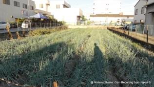 Nintendo's Rice Field
