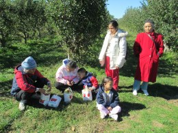 apple picking 12