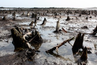 The Drowned Forest, a 1,500-year-old forest on Cape Sable Island's Hawk Beach, is creepy but awe-inspiring.