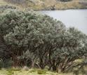Photo of a woodland near Lake Titicaca.