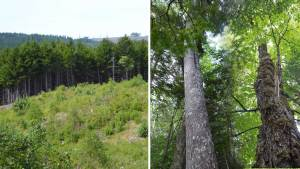 "Two woodlots in Nova Scotia: are harvests on both ""aligned with the nature-based requirements of Nova Scotia's lands? Close to 90% if all harvests are celarcuts."""