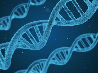 DNA - Genes - research