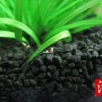 栄養系ソイルの溶出物:アマゾニアソイルを使う時に注意するポイント!