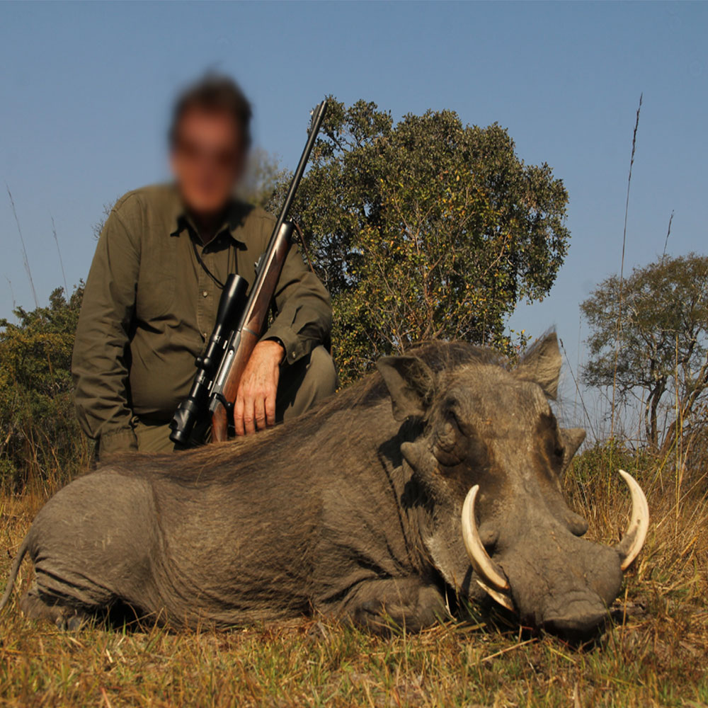 Nsonga Game Management & Lodges - Warthog Hunt
