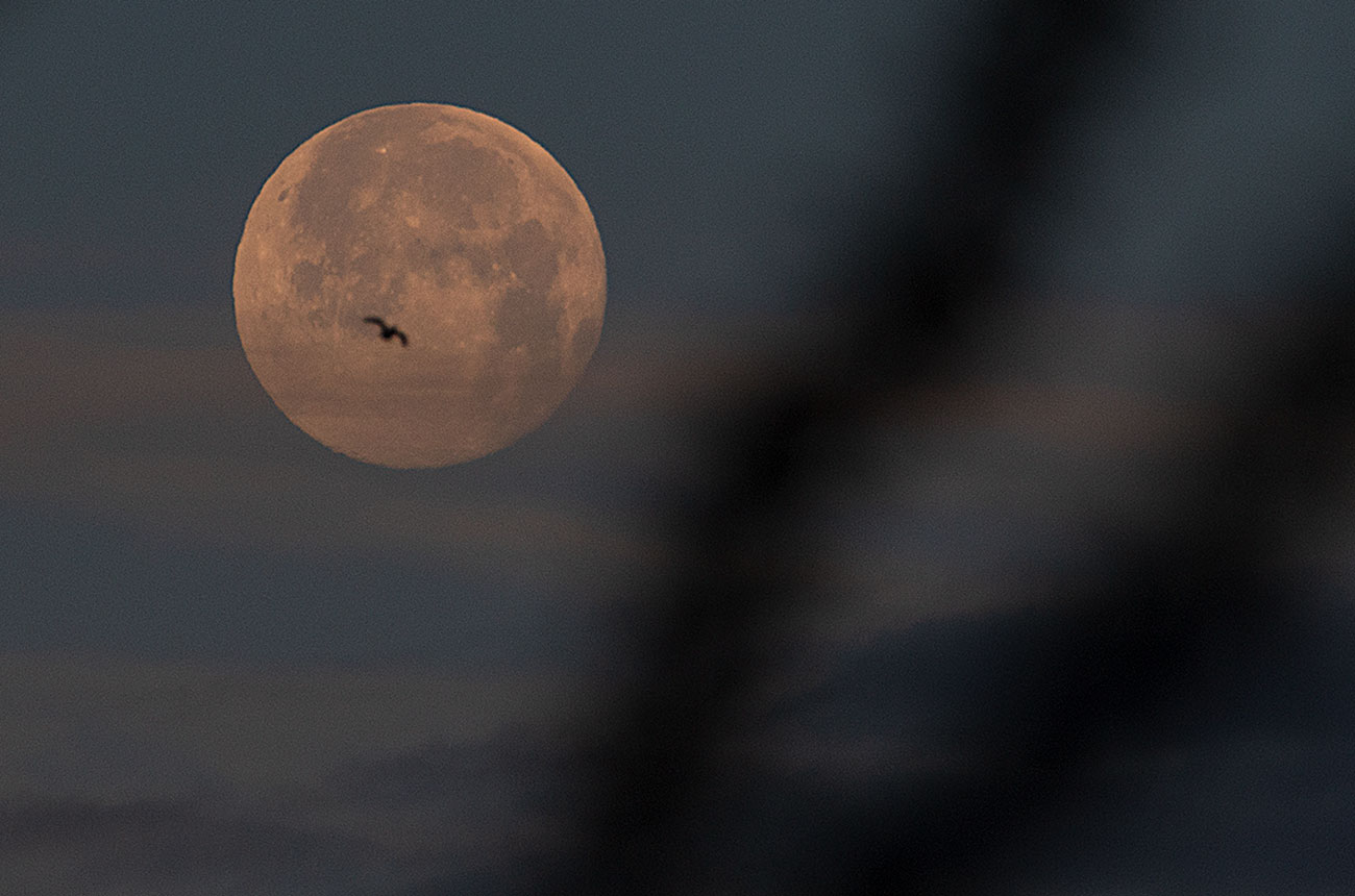 Wolf Moon 2021