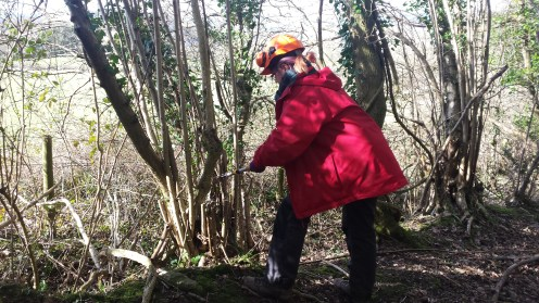 Me coppicing a hazel stand in Smallcombe Woods
