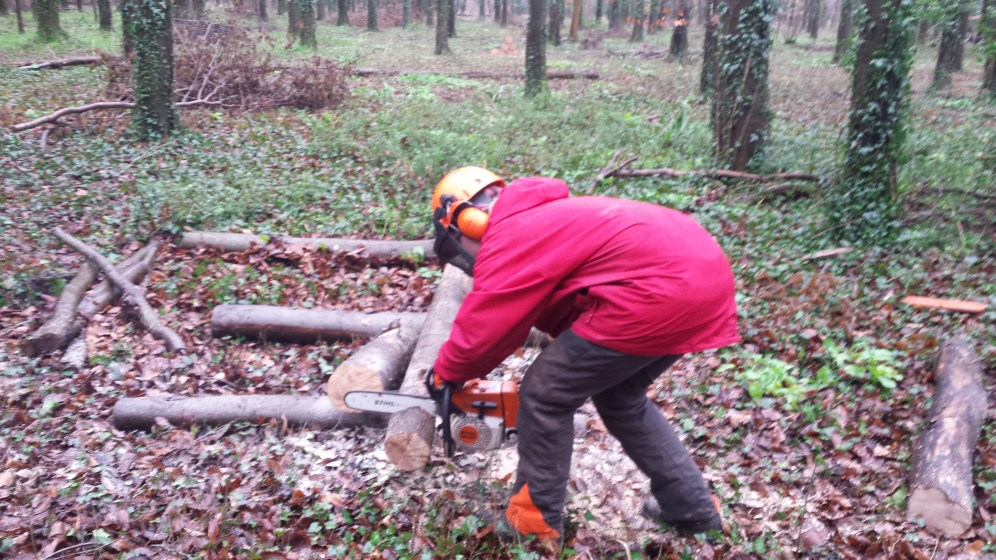 Me crosscutting a log during my chainsaw maintenance and crosscutting course.