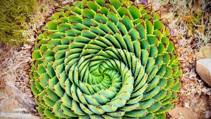 Qué es la sucesión de Fibonacci? Todo sobre la fórmula de la naturaleza