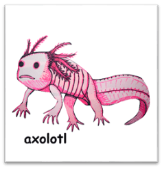 C:UsersSAVIDownloadsAxolotl.png