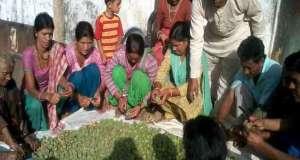 nti-news-wild-fruit-stopped-migrating-in-uttarakhand