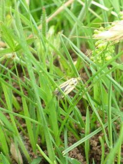 Kelvin Irwin - Capsid Bug