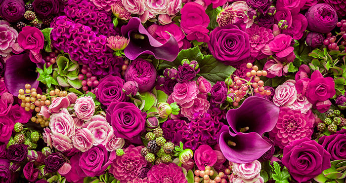 Turkish roses, from gentle gifts to profitable investment:
