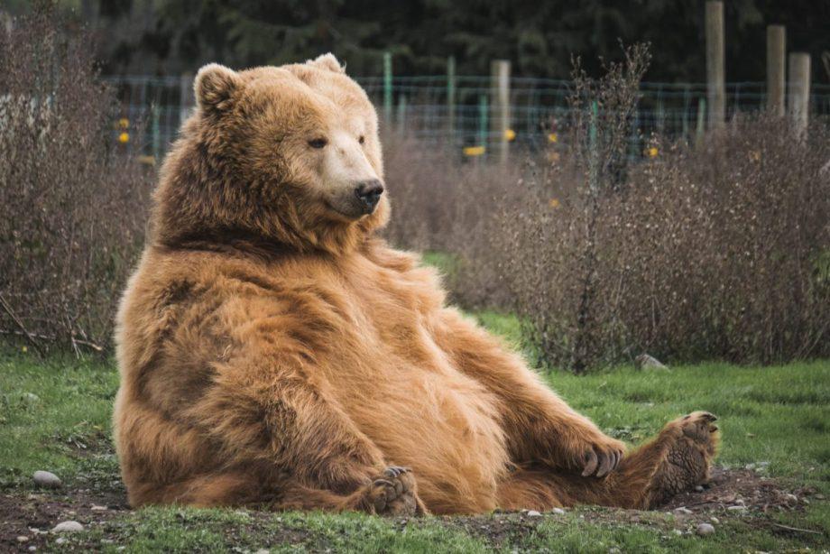 折り紙動物園!熊の折り方 まとめ