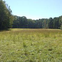 trailsfield