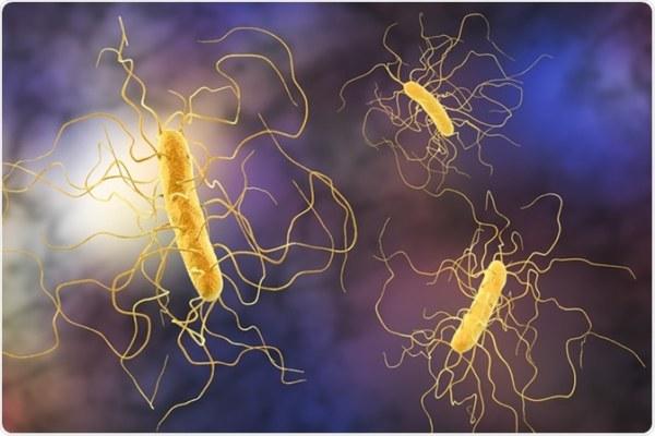 Επιστήμονες ανακάλυψαν ότι το κοινό βακτήριο Clostridium difficile που μολύνει το έντερο προκαλώντας έντονη διάρροια εξελίσσεται πλέον σε δύο ξεχωριστά είδη