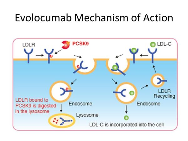 Evolocumab Mechanism of Action