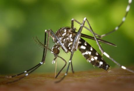 Πώς μεταδίδεται ο ιός του δυτικού Νείλου - Σημάδια και συμπτώματα