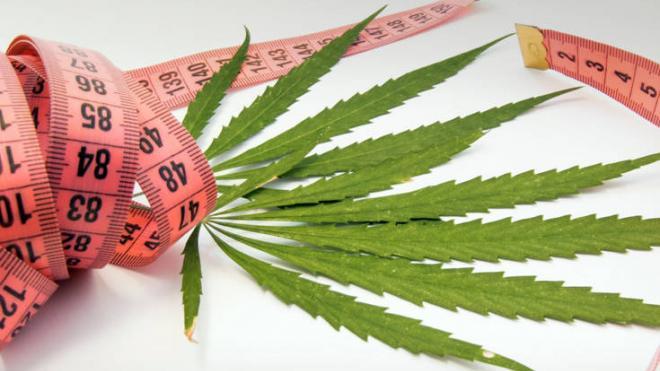 Σύμφωνα με την έρευνα οι ενήλικες που κάνουν χρήση κάνναβης ή μαριχουάνας τείνουν να έχουν μικρότερο βάρος από εκείνους που δεν είναι χρήστες.