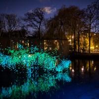 Festival de las Luces de Amsterdam.