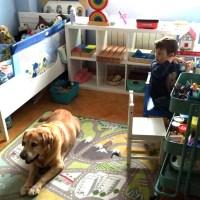 Perros y Montessori