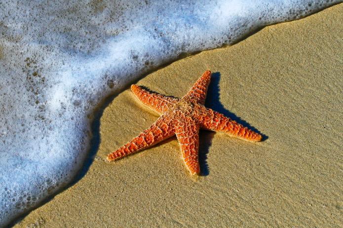 Comment se comporter sur une plage naturiste ?