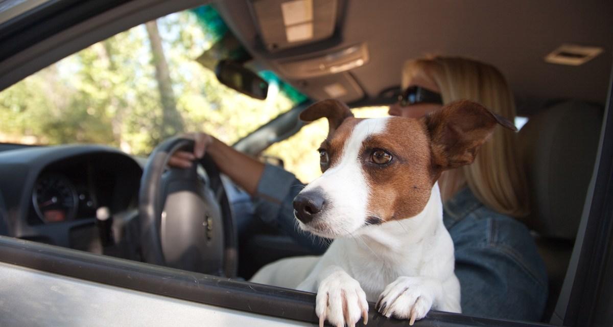 Viaje de perros: consejos para viajar seguros