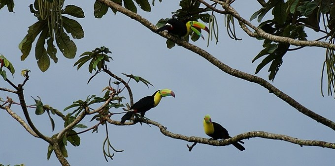 Nuevo Arenal Birdwatching