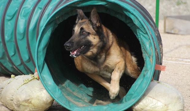 perros-2