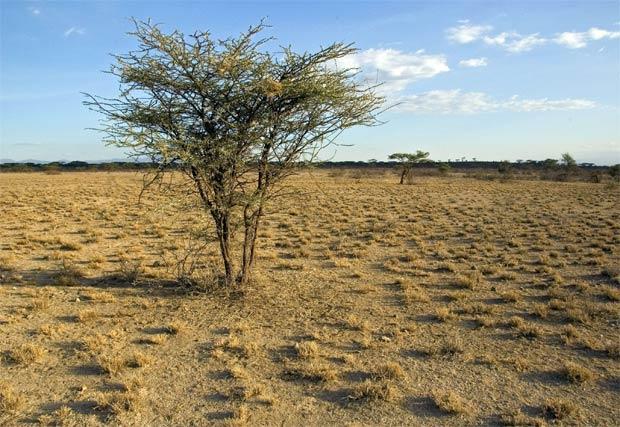 microbios-en-suelos-aridos
