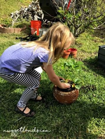 vegetable garden big nugget