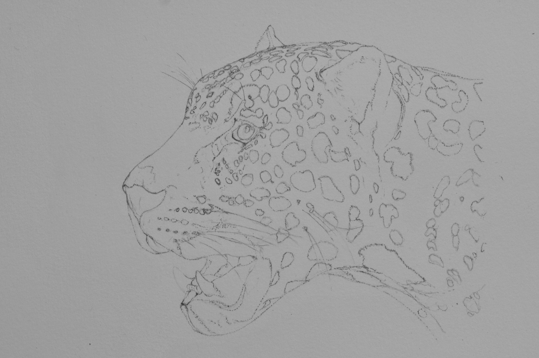 Dessin De Jaguar Actualise 6eme Dessin