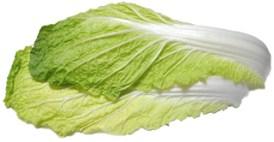 白菜web