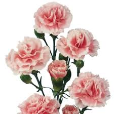 Ungkapkan Rasa Kasih Sayangmu Dengan Memberikan 3 Bunga Berikut Ini - Bunga Carnation